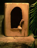 The lemur in the house in a zoological gardens. — Stock Photo