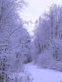 Winter's landscape — Stockfoto