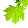 Leaves — Stock Photo #2168447