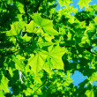 Leaves — Stock Photo #2168459