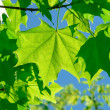 Leaves — Stock Photo #2168482