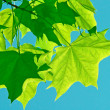 Leaves — Stock Photo #2168497