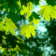 Leaves — Stock Photo #2168511