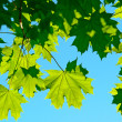 Leaves — Stock Photo #2168539