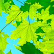leaves&quot — Stock Photo