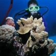 Stock Photo: Young male scuba diver near coral head