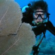 Scuba diver by coral fan — Foto Stock