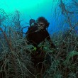 Woman scuba diver surrounded by underwater marin — Stock Photo