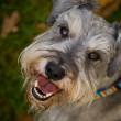 Stock Photo: Smiling happy dog close up