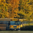 Stock Photo: School bus line up on a fall day
