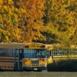School bus line up on a fall day — Stock Photo