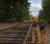 Dog standing next to rail road tracks — Stock Photo