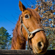 Stock Photo: Horse at Rail Fence