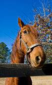 Horse at Rail Fence — Stock Photo