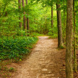Stock Photo: Dirt Trail Through Trees