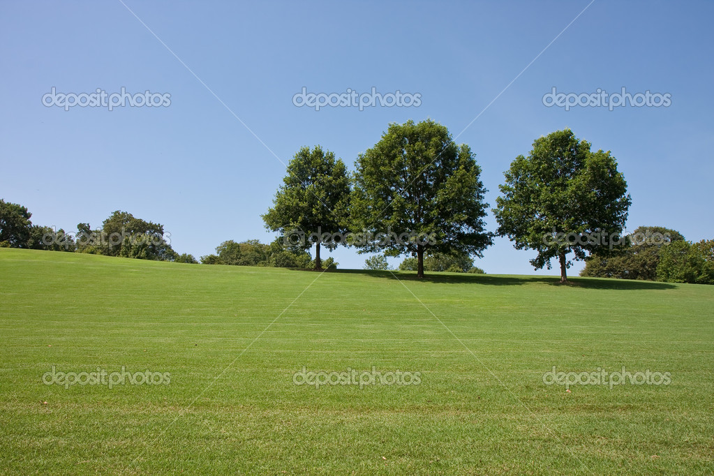 A nice green grassy hill with trees on top against blue sky — Stock Photo #2061328