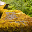 Stock Photo: Mossy Guardrail