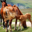Horses up to hill — Stok Fotoğraf #1974528