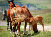 Horses up to a hill — Stock Photo