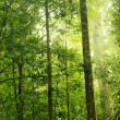 Royalty-Free Stock Photo: Green Forest.