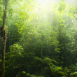 Green forest. - Stock Photo