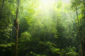 Green forest. — Foto Stock