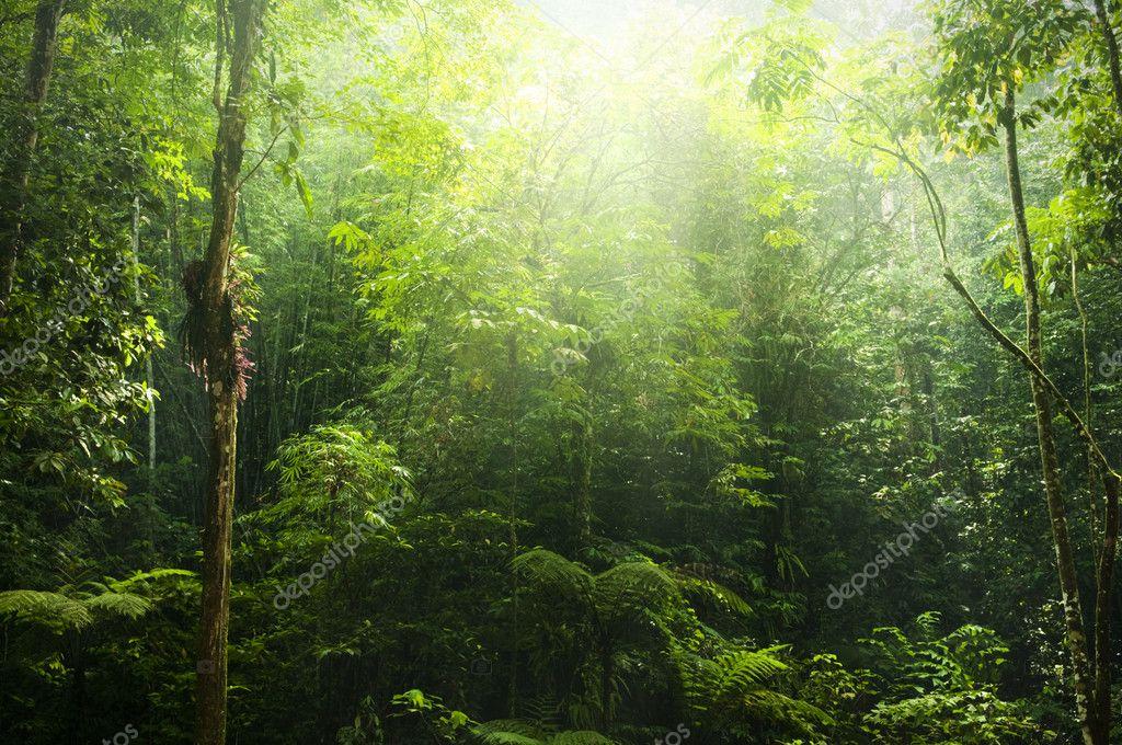 Фотообои Зеленый лес.