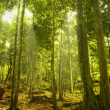 Green forest — Stock Photo #2358494