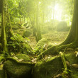 Royalty-Free Stock Photo: Green forest