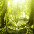 Green forest — Stock Photo #2358828