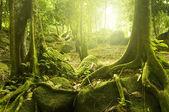 Yeşil orman. — Stok fotoğraf