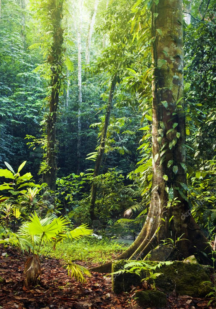 Tropical Rainforest. — Stock Photo © szefei #2357744