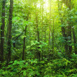 Dense forest. - Stock Photo