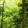 Green forest — Stock Photo #2363120
