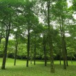 Green forest — Stock Photo #2364706