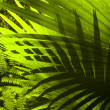 Stockfoto: Adventure to tropical dense forest.
