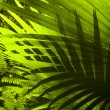 Adventure to tropical dense forest. - Stock Photo