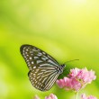 Butterfly — Stock Photo #2365748