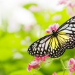Butterfly — Stock Photo #2365763