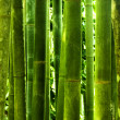 Bamboo forest — Stock Photo