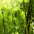 Bamboo forest. — Stock Photo #2367763