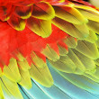 Colourful wings - Stock Photo