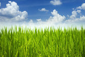 Green grass and sky. — Stock Photo