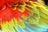 Colourful wings — Stock Photo