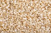 Sesame Seed. — Stock Photo