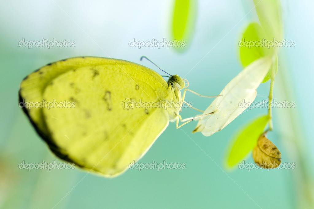 Close up butterfly  — Stock Photo #2365693