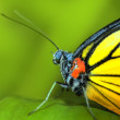 Butterfly — Stock Photo #2379274