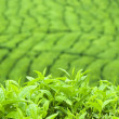 Tea Leaf — Stock Photo #2379466