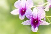 Purple orchid. — Stock Photo