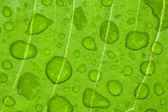 Water-drop on a green leaf — Stock Photo